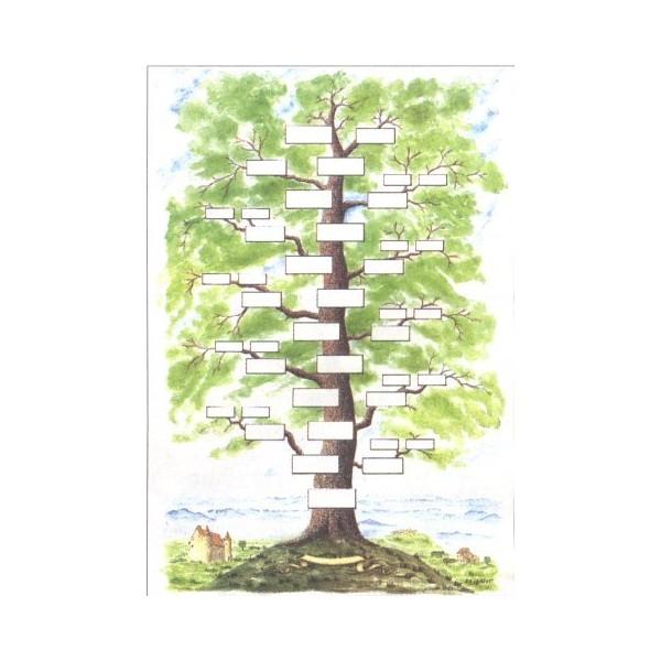 Arbre g n alogique agnatique ou cognatique 12 g n rations - Photo d arbre a imprimer ...